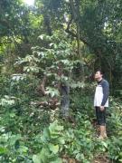 Kết quả thực hiện công trình lâm sinh bảo vệ rừng, khoanh nuôi  xúc tiến tái sinh rừng và chăm sóc rừng trồng năm 2018