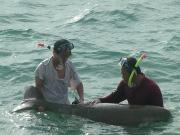 Vùng biển Côn Đảo được công nhận là vùng quan trọng bảo tồn các loài thú biển