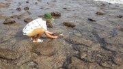 Vườn quốc gia Côn Đảo giải cứu 01 cá thể rùa biển quý hiếm khỏi rác thải nhựa