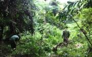 Ban quản lý Vườn quốc gia Côn Đảo tích cực thực hiện công tác Bảo vệ và phát triển rừng năm 2018