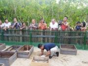 Rùa con nở trở về biển tại bãi biển Đất Dốc, Côn Đảo.