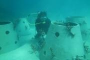 Phục hồi san hô tại Khu Ramsar Vườn quốc gia Côn Đảo