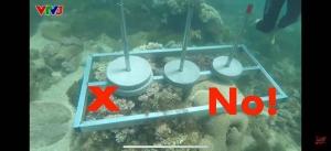 """Tổ chức Sinh vật biển Việt Nam nói về việc đặt bê tông lên rạn san hô trong """"Cuộc đua kỳ thú"""" và những quy tắc mà người lặn phải nhớ"""