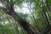 Trung tâm Vườn - Khu trồng rừng sinh thái Sở Rẫy
