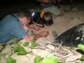 TOUR WATCHING SEA TURTLES LAYING EGGS IN TAI ISLAND