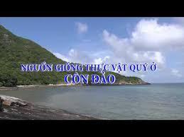Nguồn giống thực vật quý ở Côn Đảo