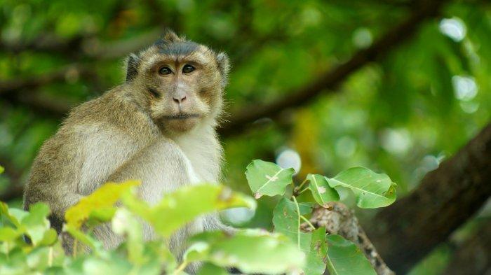 Khám phá rừng Vườn quốc gia Côn Đảo
